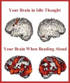 brain-vertical